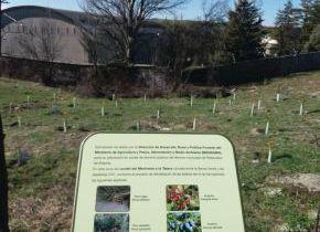 Palazuelos de Eresma celebra el día del árbol dedicandole una campaña que abarca todo el mes de marzo