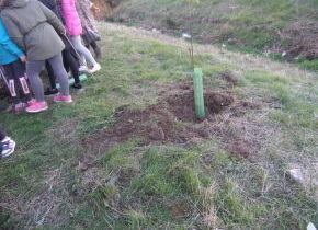Nuestros escolares plantan árboles en el Arroyo de la Vega cortesía de la ONG Greenfriends (ONG ETW). Colabora: Ayuntamiento de Palazuelos de Eresma