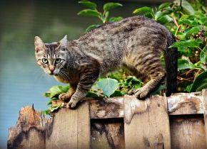 Colonias felinas: consejos a los alimentadores